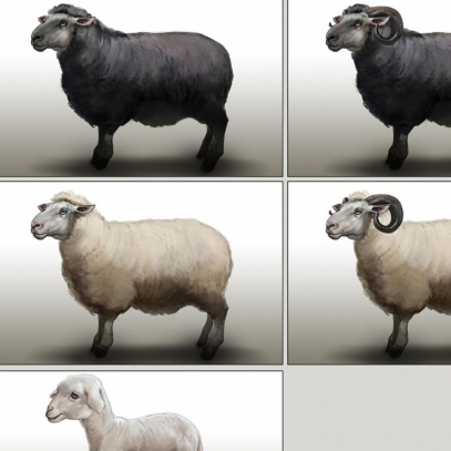 SheepVariations